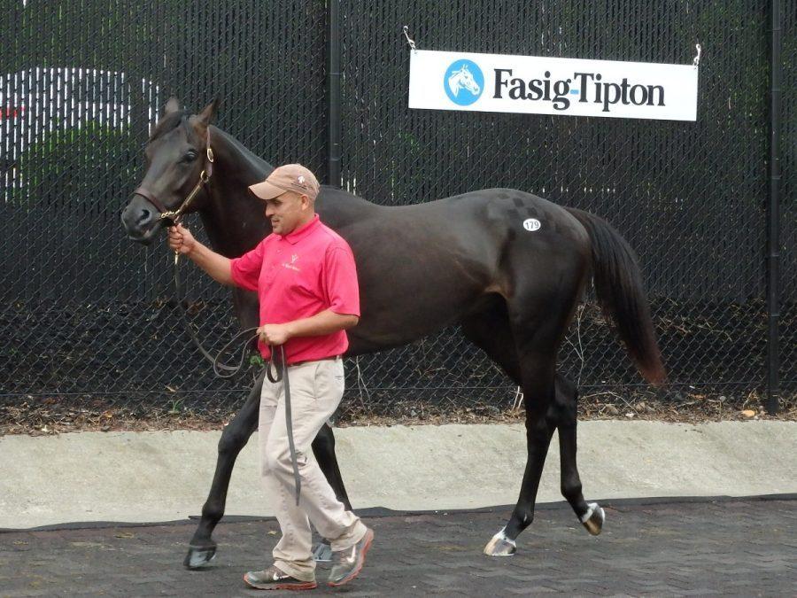 Fasig-Tipton mixed sale adds dozens of horses