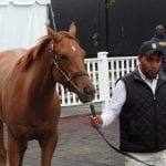Record Curlin colt powers strong Fasig-Tipton sale