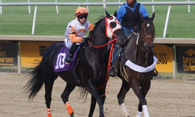 Ben's Cat: 6 races to remember him by