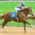 Savvy Pecoraro barn off to fast start at Delaware Park