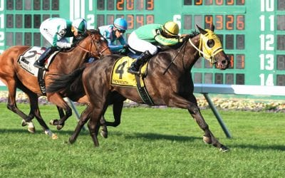 Big M turf meet concludes with big gains