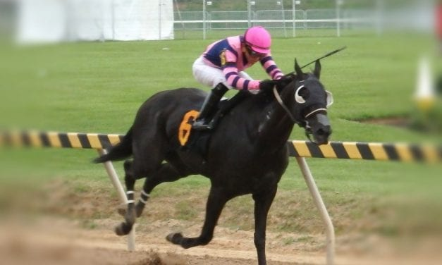"""""""Surprise"""" homebred Willie B Mine takes Big T feature"""