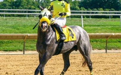 For Joe Arboritanza, one eye on his horses, one eye on Irma