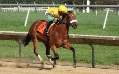 Angel At War looks to win seventh straight in What A Summer