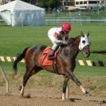 My day as the Timonium on-air handicapper