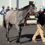 Fasig-Tipton Midlantic mixed: Some hips to watch