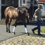 Alliance, half-brother to Tepin, to stand at Maryland's Bonita Farm