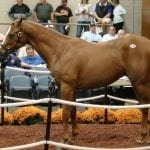Fasig-Tipton Mixed: Three things to watch for
