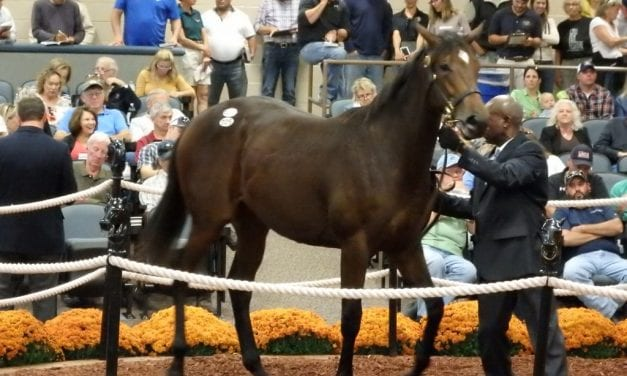 Region-bred yearlings power first day of Fasig-Tipton sale