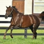 "Holy Boss: Blazing speed, ""impeccable looks,"" and a quality pedigree"
