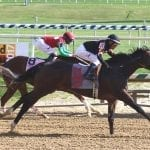 Limited View heads Md. Juvenile Filly Championship field