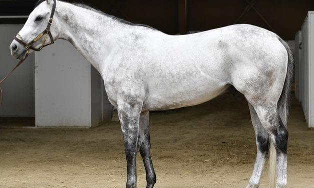 Kobe's Back joins Bonita stallion roster