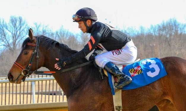 Limited View: Connections on fence for next start
