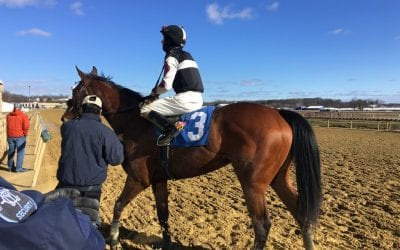 First-out winner Dictate Cool another promising Sagamore runner