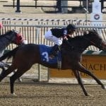 Limited View looks to carry speed in Beyond the Wire