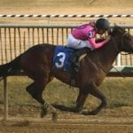 MD-breds dominate first Top Midlantic-bred Poll of 2018