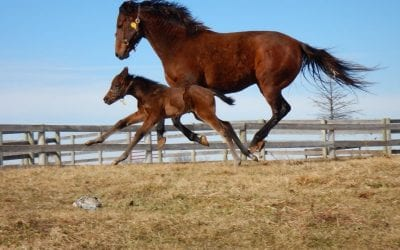 Report of mares bred shows 2019 declines