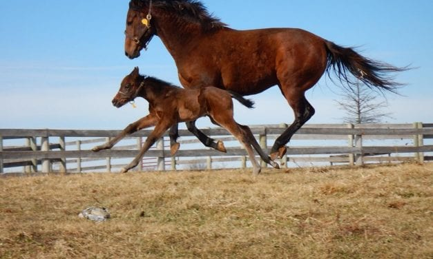 First Peace and Justice foal named via social media contest