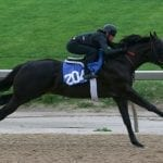 "Fasig-Tipton: Opening session ""solid"" as More Than Ready colt stars"
