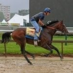 Preakness odds through Friday's racing
