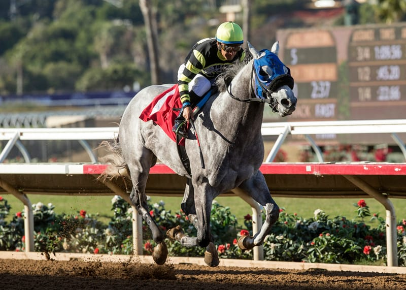Greyvitos: From fire to surgery and back to racing
