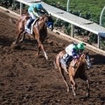 Breeders' Cup: Crowdsourced handicapping