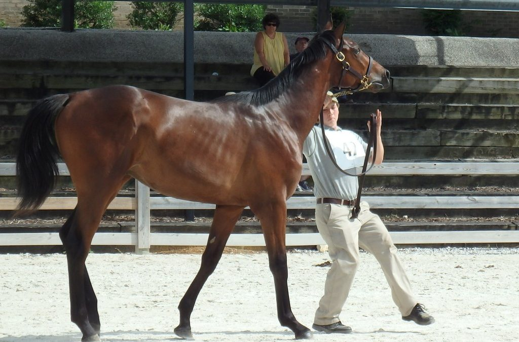 96 compete in MHBA Yearling Show