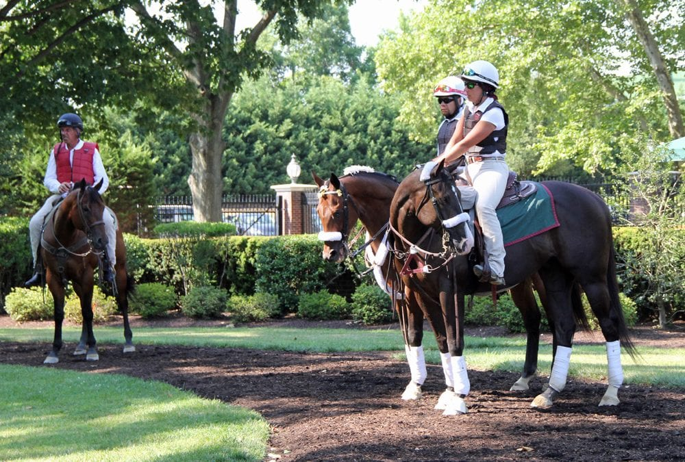 Delaware Park Handicappers' Notebook 2019 Vol. 5