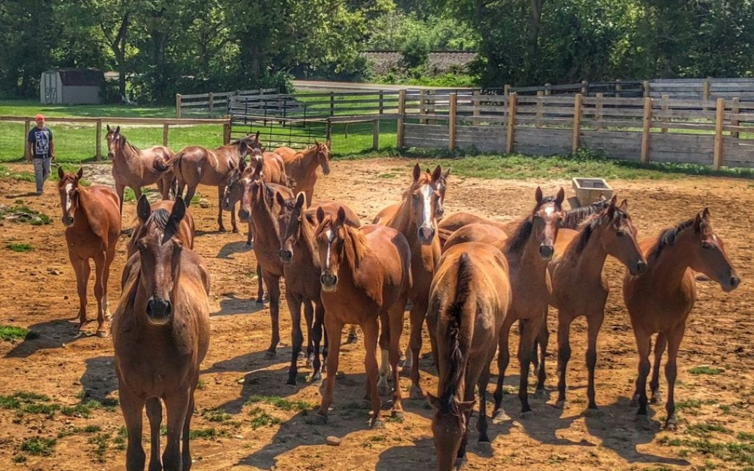 WVBC Name that Foal contest returns