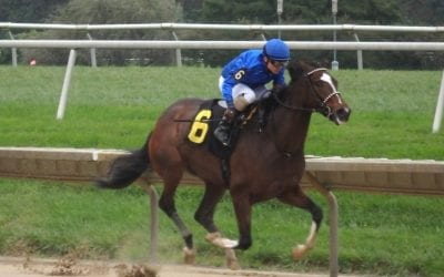 Delaware: Regally bred Alfresco sharp on debut