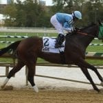 Lewisfield sizzles in MD Million Sprint