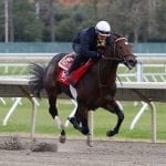 Breeders' Cup: Spotlight beckons for Sacco, Mind Control