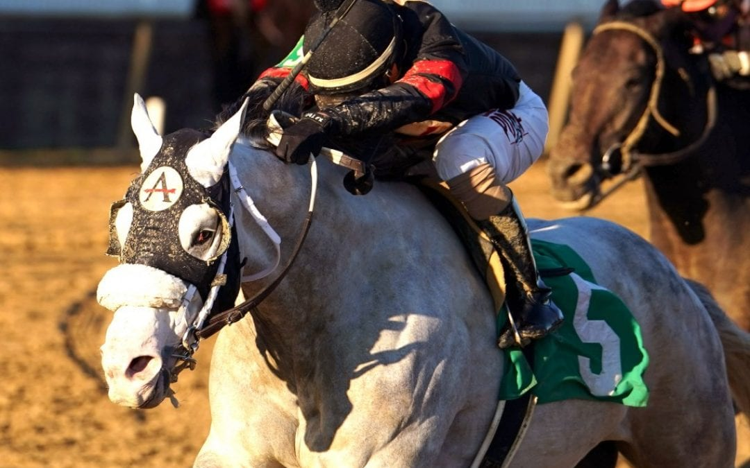 Unbridled Juan surges to take Richard Small Stakes