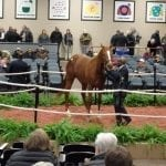 Fasig-Tipton Mixed: Top line numbers dip, but with key bright spots