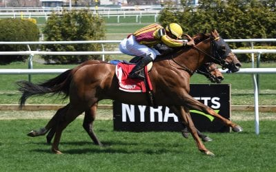 NJ-bred Regally Irish takes Bridgetown, eyes Jimmy Murphy as possible next start
