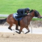 Safety the watchword during Timonium breezes for 2yo sale