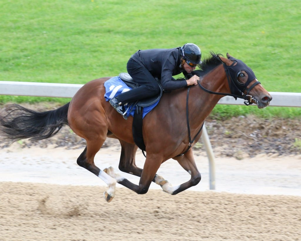 Hip 118 at Fasig-Tipton Midlantic 2yo in training