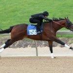Half-million dollar horse tops day one of Fasig-Tipton Midlantic 2yo sale