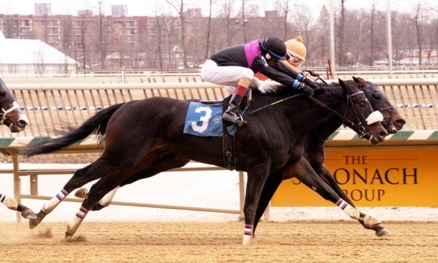 Motion hopes to be Flying the Flag in Pimlico Special