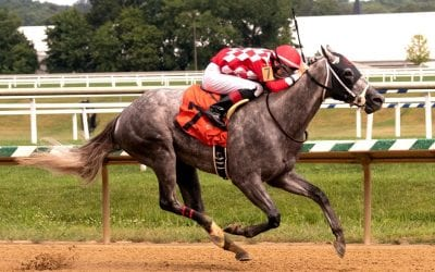 Bull Shark wins Laurel feature, now 2-for-2