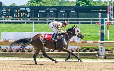Aimee Hall doing it all with blue-collar stable