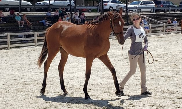 Chanceland Farm homebred takes top honors at MHBA Yearling Show