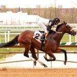 Maryland Pride stakes could prove boon for McCarthy, Trombetta