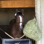 """""""Laid-back"""" Jais's Solitude first among Va. Derby equals"""
