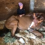 """""""Love and affection"""" for horses propels trainer Eckert"""