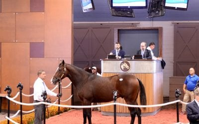 Sales tales: From distraught foal to sale-topper