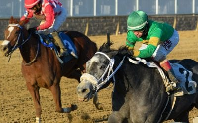 Cofactor, Newstome score in Laurel juvenile stakes