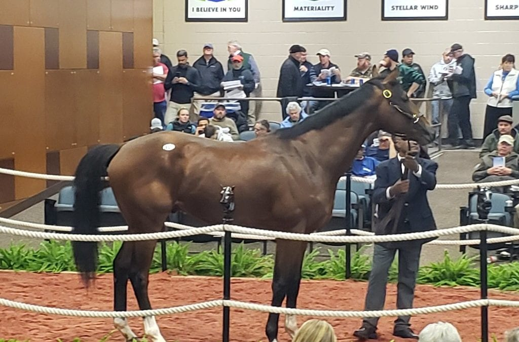 Maryland Juvenile Futurity proves productive – in sales ring