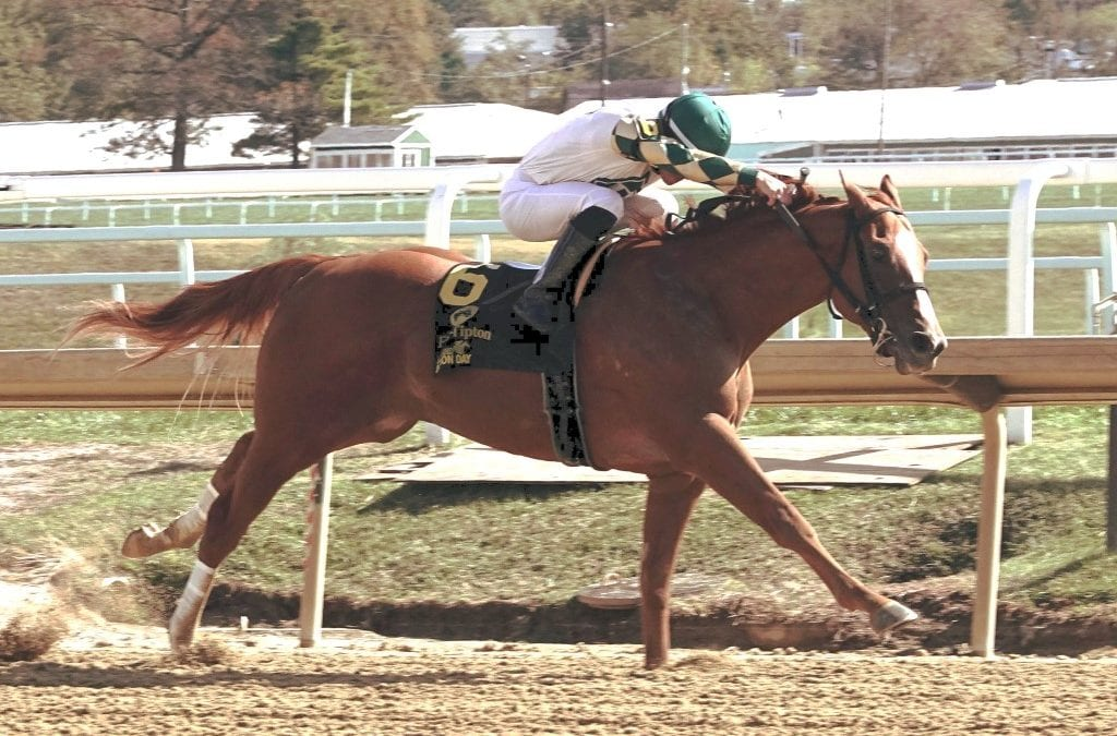 Parade of Colors helps breeder Williamson march on
