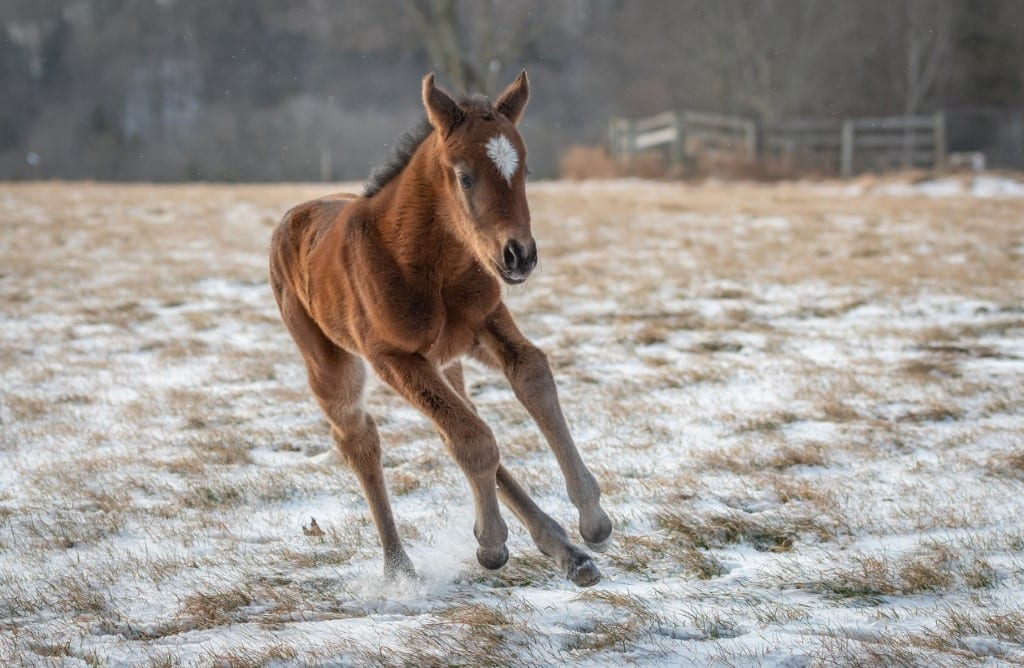 Hoppertunity sires first foal